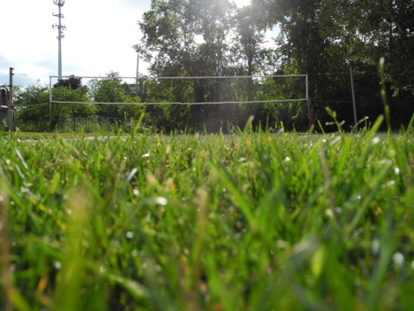 Photo of a volleyball net from the view of someone laying on the grass.